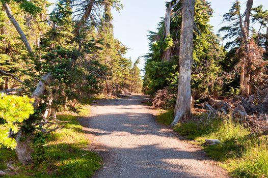 Path in Hurricane Ridge, Olympic Peninsula