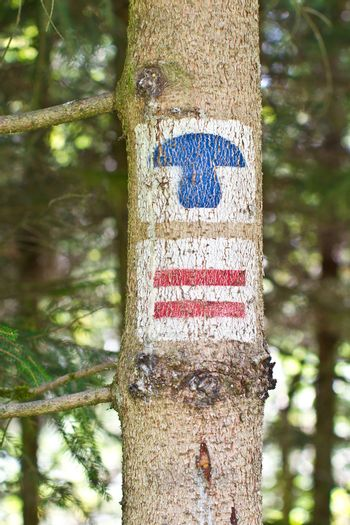 Tree trunk with hiking signs