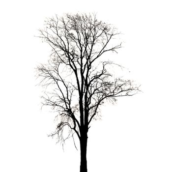 Silhouette of dead tree on white background.