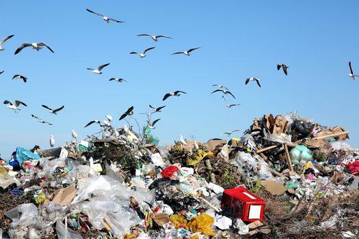 Waste Disposal Dump and Birds