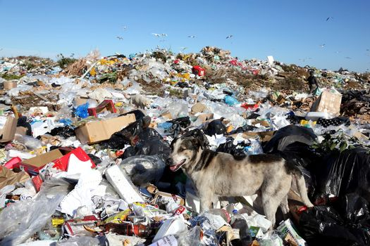 Waste Disposal Dump and Dog