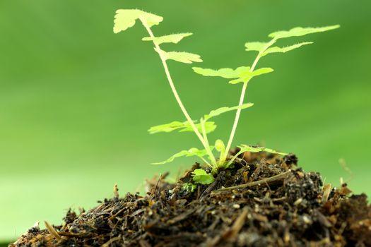 green seedling on ground in garden.