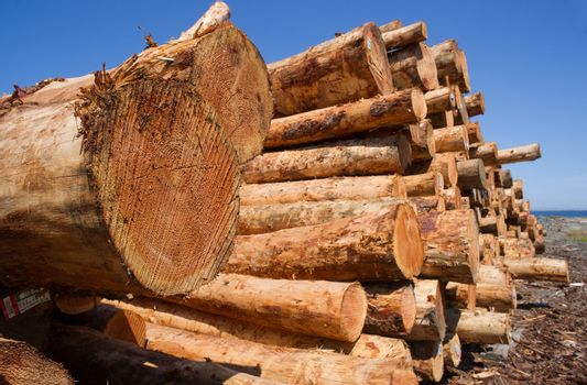 Timber Wood Logging Industry Lumber Raw Logs Stacked