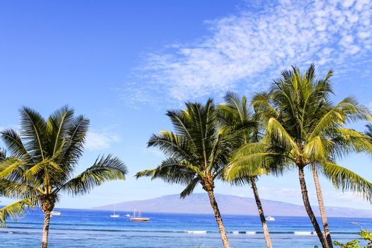 Palm trees against blue sky and ocean
