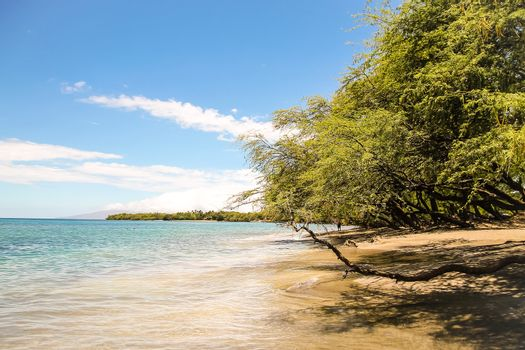 Beautiful Maui beach