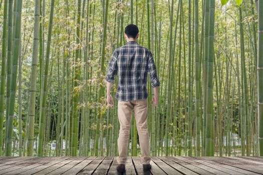 looking into the bamboo forest
