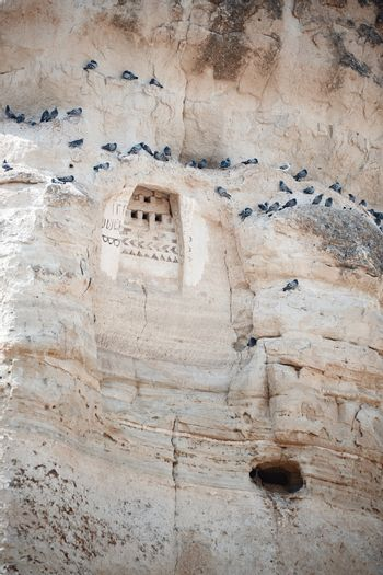 Wild pigeons on a rock with ancient ornament. Turkey Cappadocia