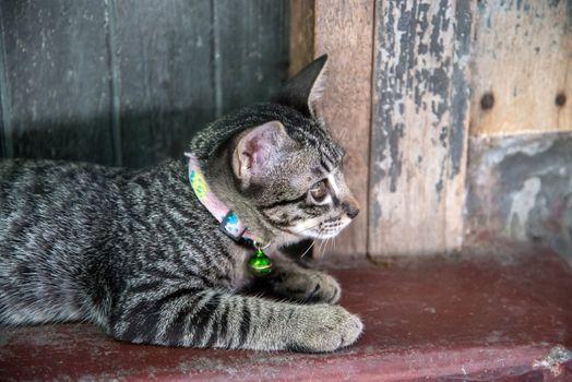 Close up lovely Thai small kitten sitting