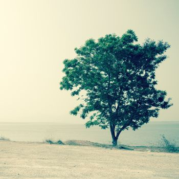 lonely tree in summer day background.Filtered image:cross processed vintage effect