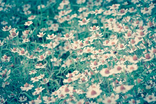 field of daisy flowers,lonely tree in summer day background.Filtered image:cross processed vintage effect