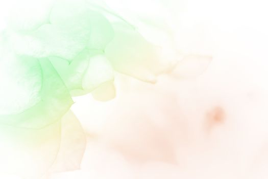 beautiful flowers made with color filters abstract