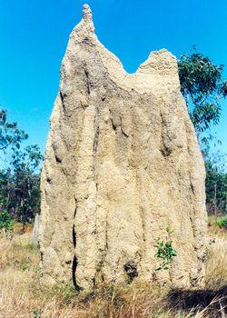 termit mound