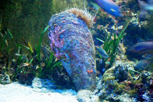 sea fin very rare