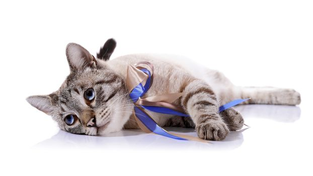 The striped cat with tapes lies on a white background.