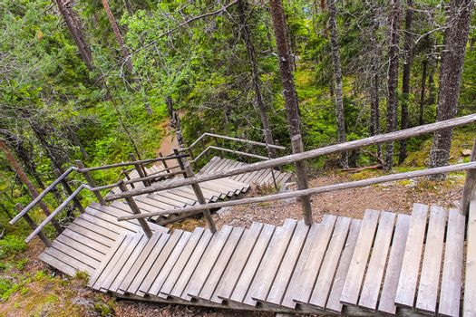 Wooden stairs in the forest