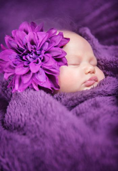 Closeup portrait of cute newborn girl sleeping wrapped in purple soft blanket, wearing stylish head flower, baby fashion concept