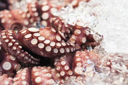closeup of raw octopus in ice