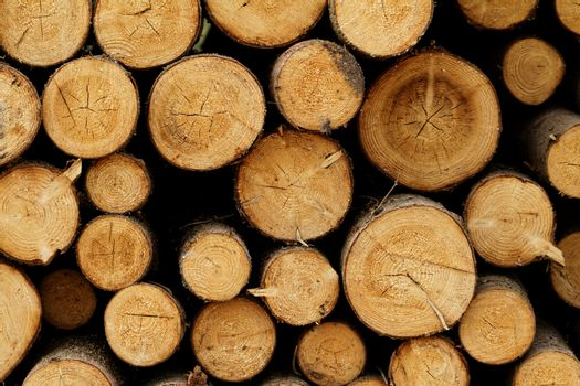 Logging