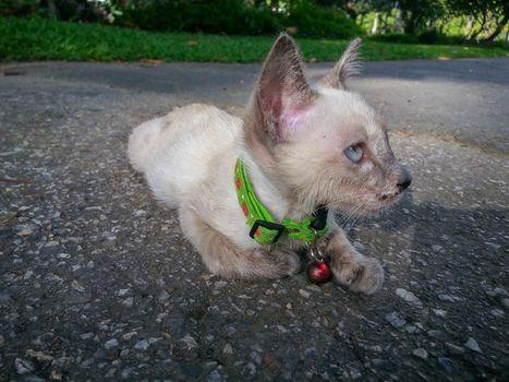 Cute cat enjoying his life available light