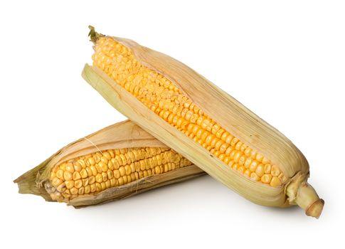 Two ears of corn