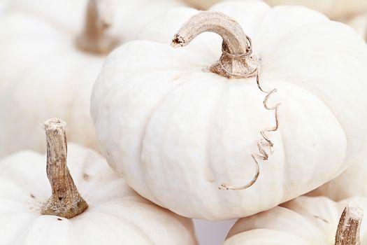 White Pumpkin Macro