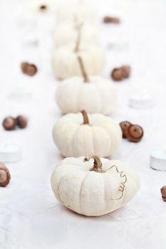 White Pumpkins in a Row