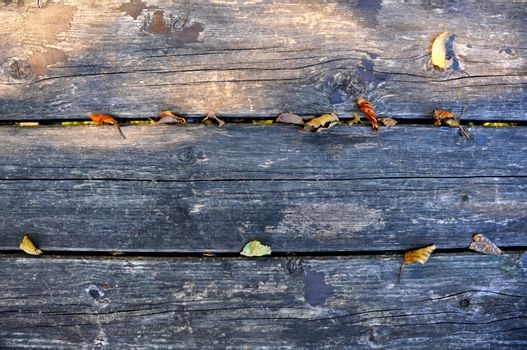 wooden beams from the veins obvious, intense and deep color with leaf