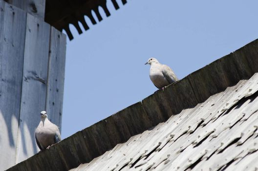 Two Doves at Wooden Roof Over Blue Sky