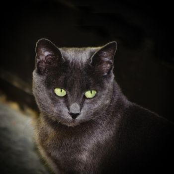 Photo of The Single Grey Cat With Green Eyes Over Dark