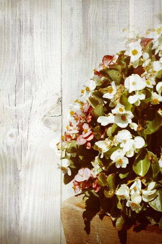 White Flower Blossom, Copyspace