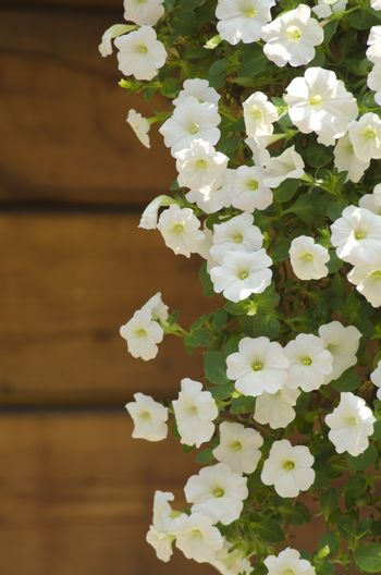 Photo of The Spring or Summer Flower Over Wooden Background