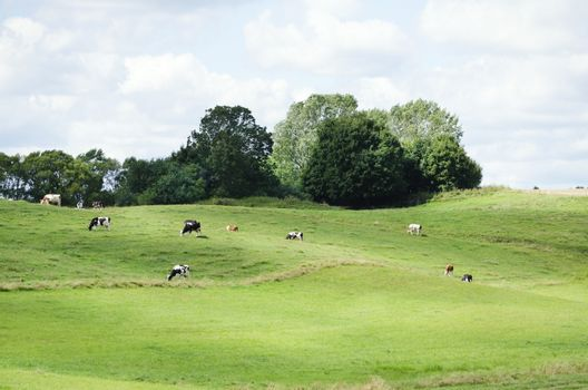 Farm Green Meadow With Different Cows