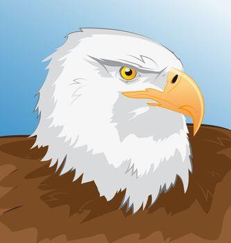 Sea eagle vector illustration for design and entertainment