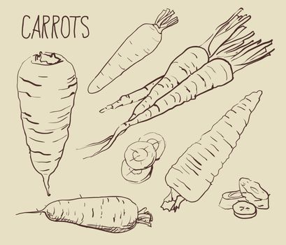 Set carrots isolated on white background. Vegetables. Food. Hand drawn. Silhouette, color, line art - vector