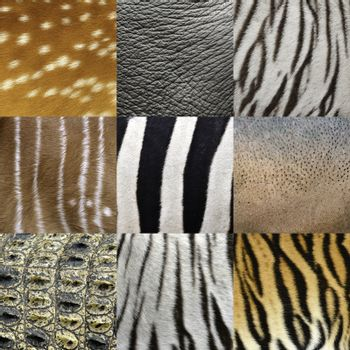 textured of an animals skin