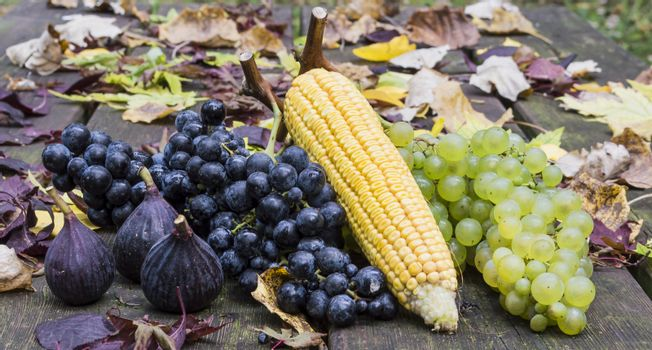 figs grape and corn fruits of autumn