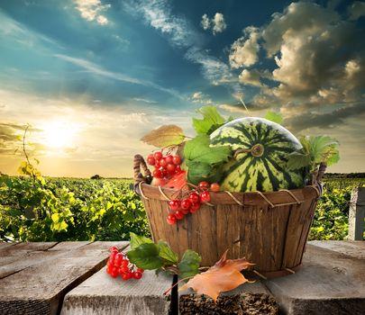 Watermelon in a basket