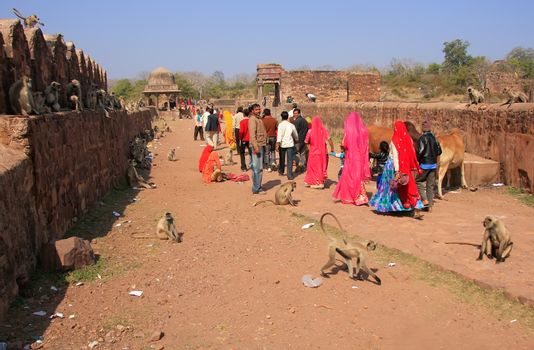 Local people walking around Ranthambore Fort amongst gray langur