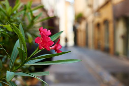 French flower