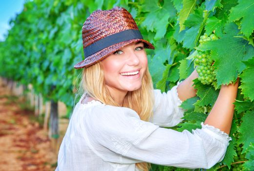 Happy girl picking grapes