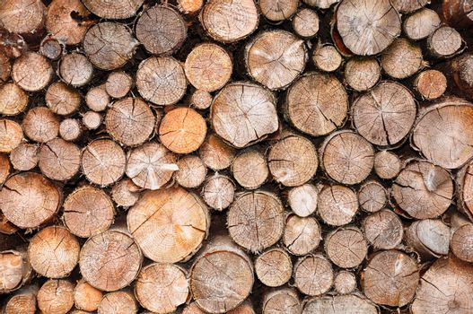 Pile of spruce wood