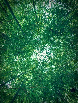 Retro look Bamboo plants