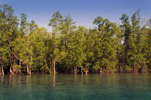 Mangrove forest in Phuket