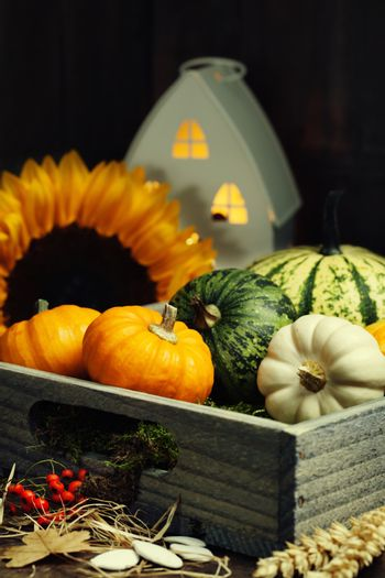 Autumn composition with little house and pumpkins  in wooden box
