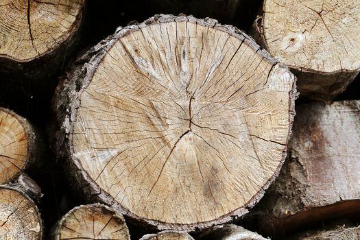 Timber closeup