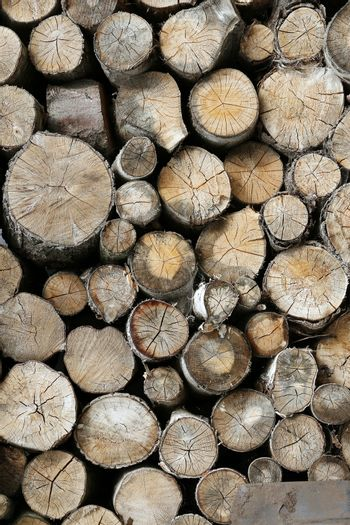 Lots of timber