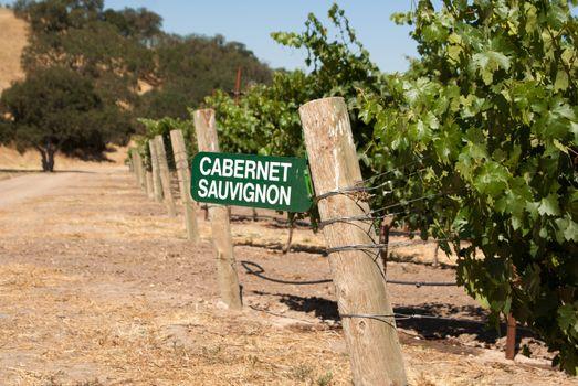 Cabernet Sauvignon grapes growing in California