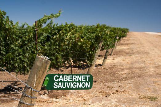 Cabernet Sauvignon Sign in California Vineyard