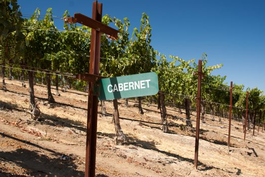 Cabernet grape sign