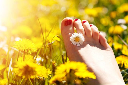 Foot of a young woman with a spring flower in fingers lying on sunny meadow.